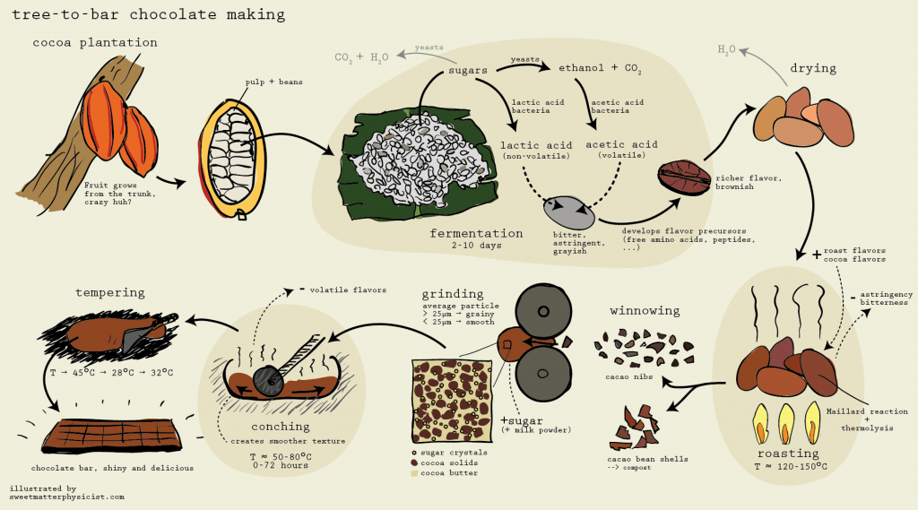 Tree-to-bar chocolate making process